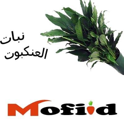 نباتات داخلية, النباتات الداخلية