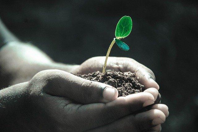 الهرمونات النباتية