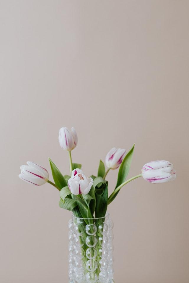 زهرة التوليب
