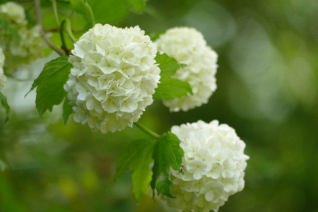زهور الربيع
