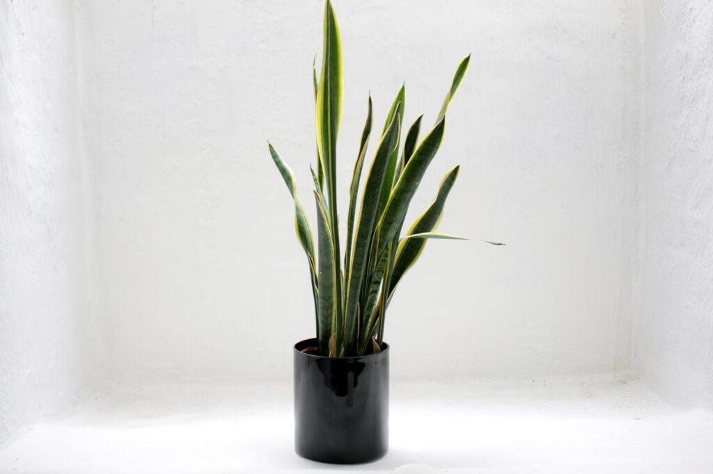 نباتات داخلية