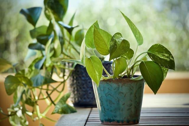 النباتات الداخلية, انواع النباتات الداخلية, كيف تساعد بعض النباتات الداخليه على تحسين هواء الغرفه, نباتات داخلية