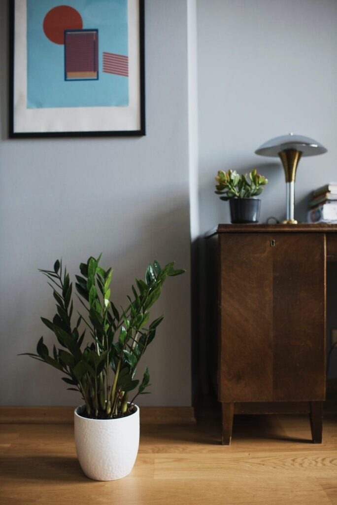 نباتات داخلية, النباتات الداخلية, انواع النباتات الداخلية, كيف تساعد بعض النباتات الداخليه على تحسين هواء الغرفه,