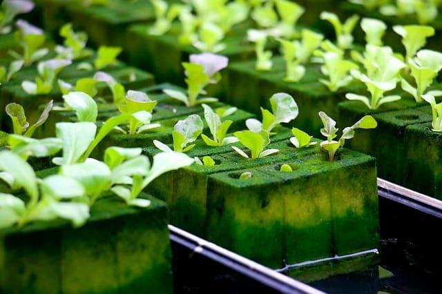 الزراعة المائية للمبتدئين